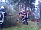 Baumfällarbeiten_13