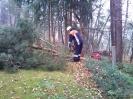 Baumfällarbeiten_15