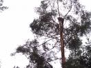 Baumfällarbeiten_17