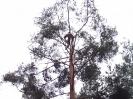 Baumfällarbeiten_18