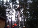 Baumfällarbeiten_1