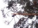 Baumfällarbeiten_24