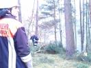 Baumfällarbeiten_25