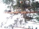 Baumfällarbeiten_28