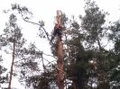 Baumfällarbeiten_29