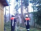 Baumfällarbeiten_30