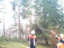 Baumfällarbeiten_31