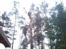 Baumfällarbeiten_33