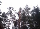 Baumfällarbeiten_34