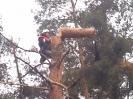 Baumfällarbeiten_35