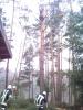Baumfällarbeiten_36