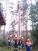Baumfällarbeiten_37