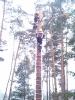 Baumfällarbeiten_38