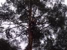 Baumfällarbeiten_3