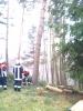 Baumfällarbeiten_42