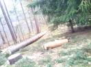 Baumfällarbeiten_43