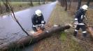 2013-01-05 THL Baum über Fahrbahn
